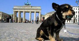 Hond in Berlijn